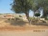 ksamil-albanien-essel-olivenbaum